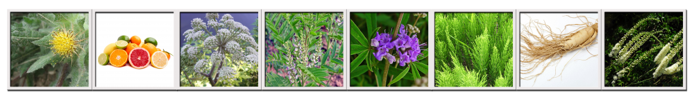 Herbs for menopause contained in the Menopausal Formula